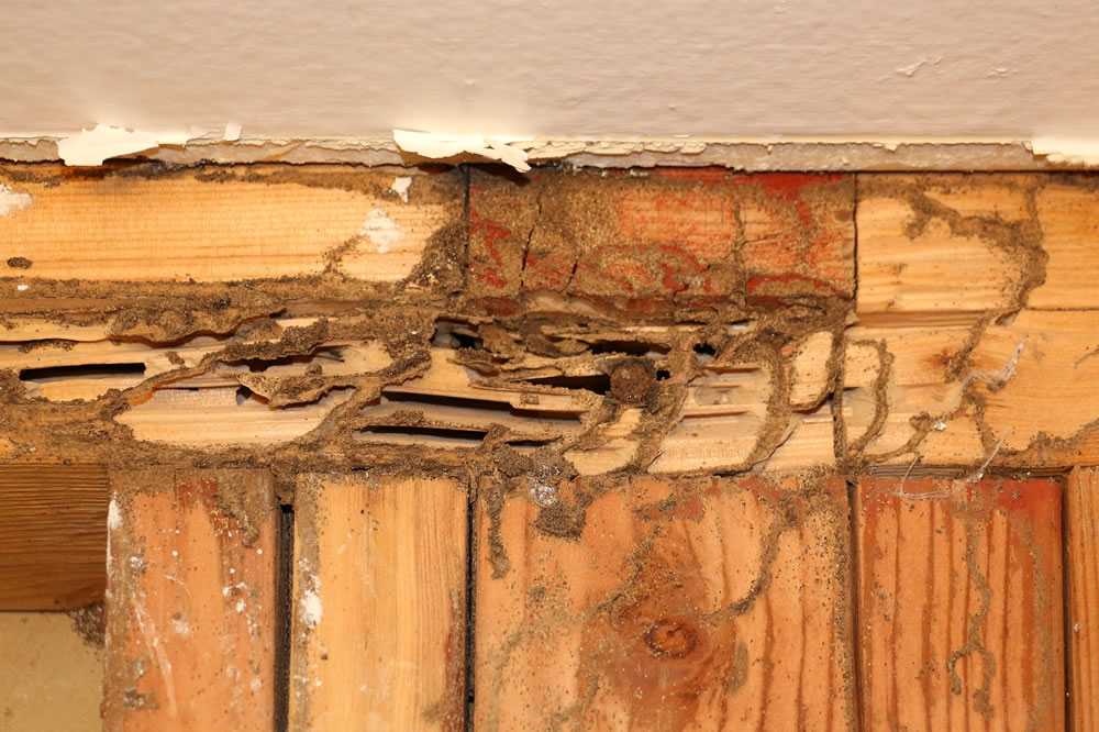 CL-100 Termite Letter and Inspections Greenville SC