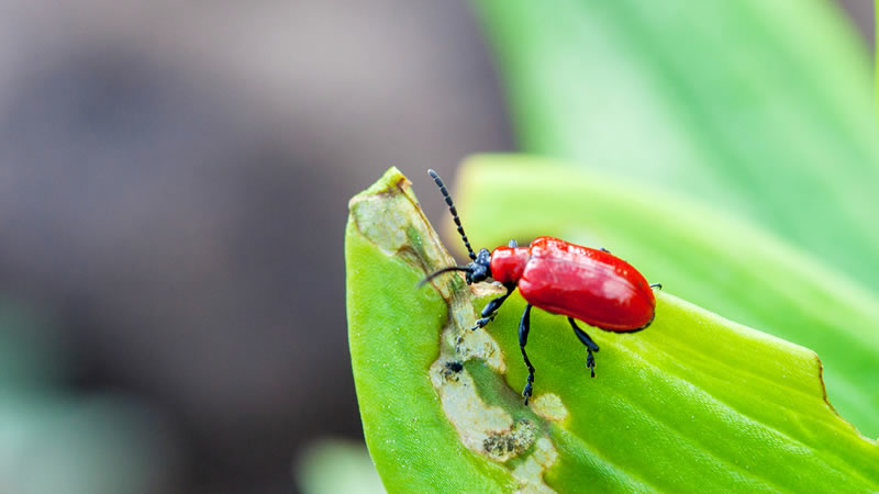 Beetle Pest Control Greenville SC