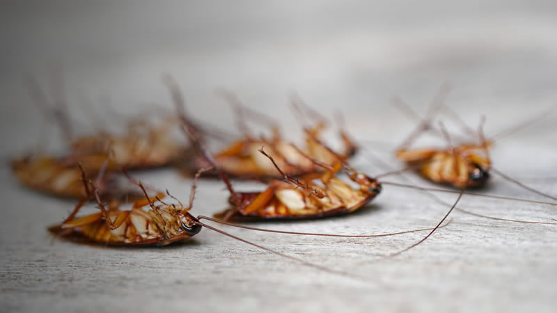 Cockroach Control Greenville SC