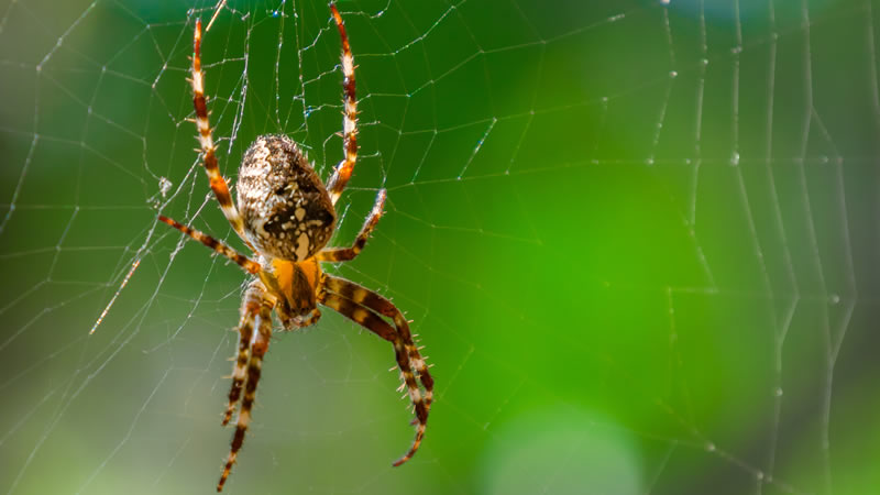 Spider Control Greenville SC